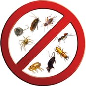 general pest control in Chennai